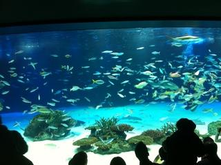 サンシャイン水族館1.jpg