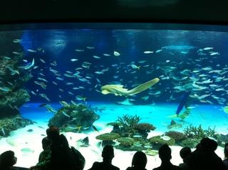 サンシャイン水族館2.jpg