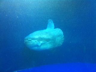 サンシャイン水族館4.jpg