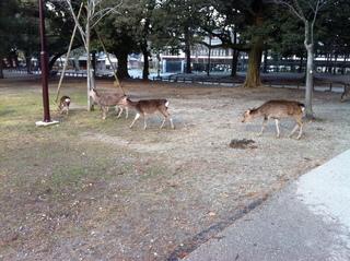 奈良公園3.jpg
